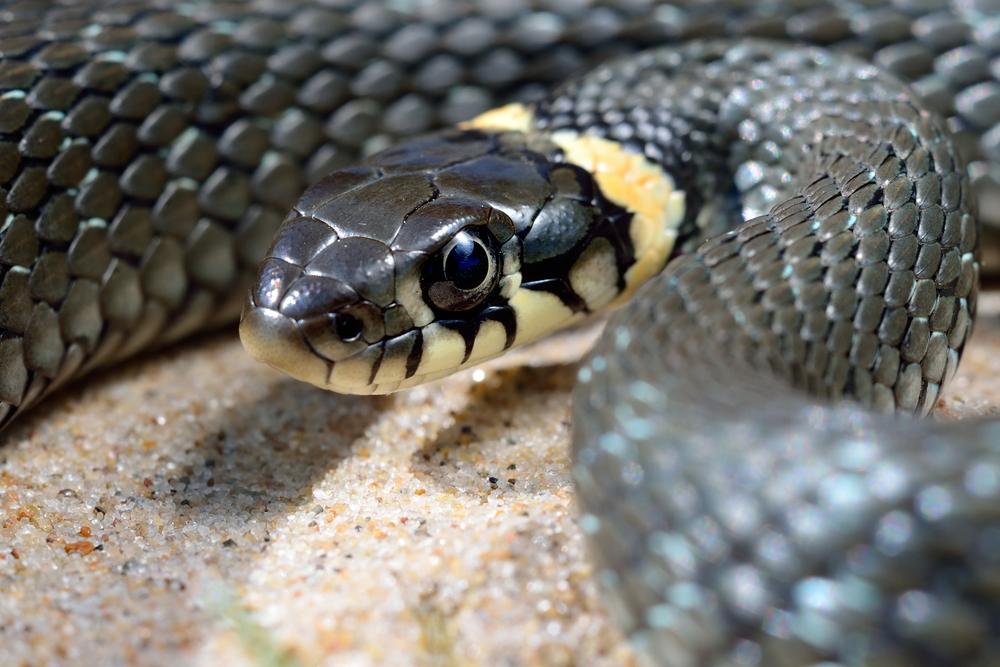 animales exoticos que puedes tener como mascota