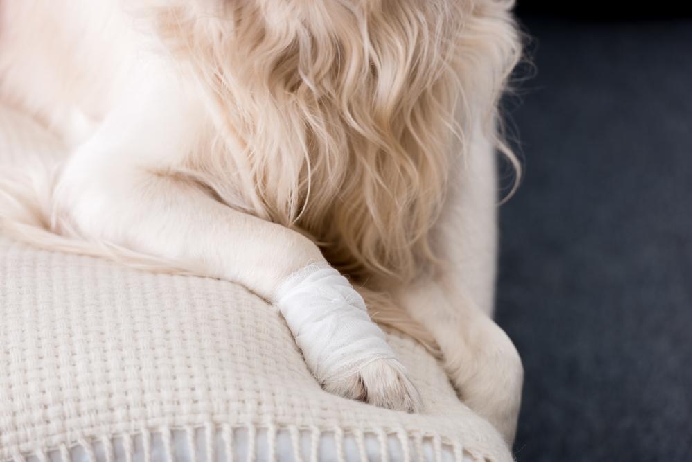 Las lesiones más comunes en perros y gatos
