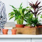 Tres plantes d'interior per decorar la teva llar i com cuidar-les