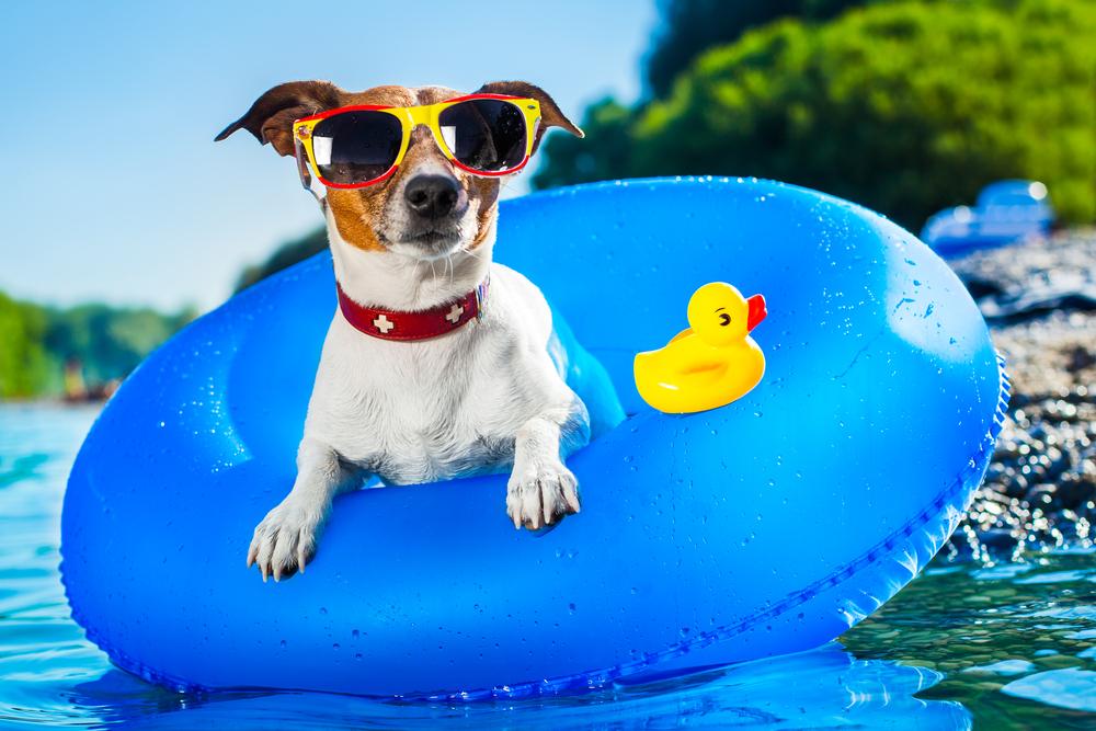 ¿Qué hacer con tu mascota durante las vacaciones? | ¿Dónde dejarla?