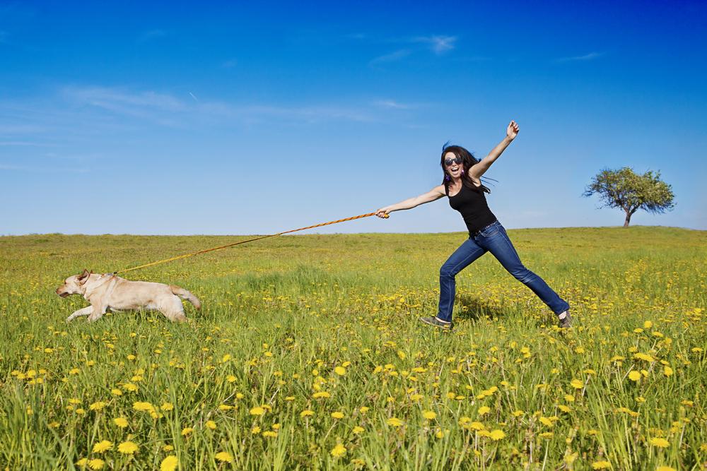 Adiestramiento canino básico | ¿Cómo hacer que tu perro no tire de la correa?