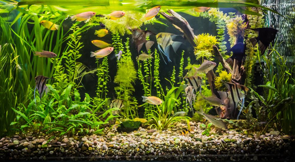 ¿Tienes peces? Te enseñamos cómo cambiar el agua de una pecera correctamente