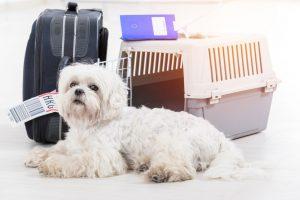 3 transportines para perros que van genial para cualquier viaje