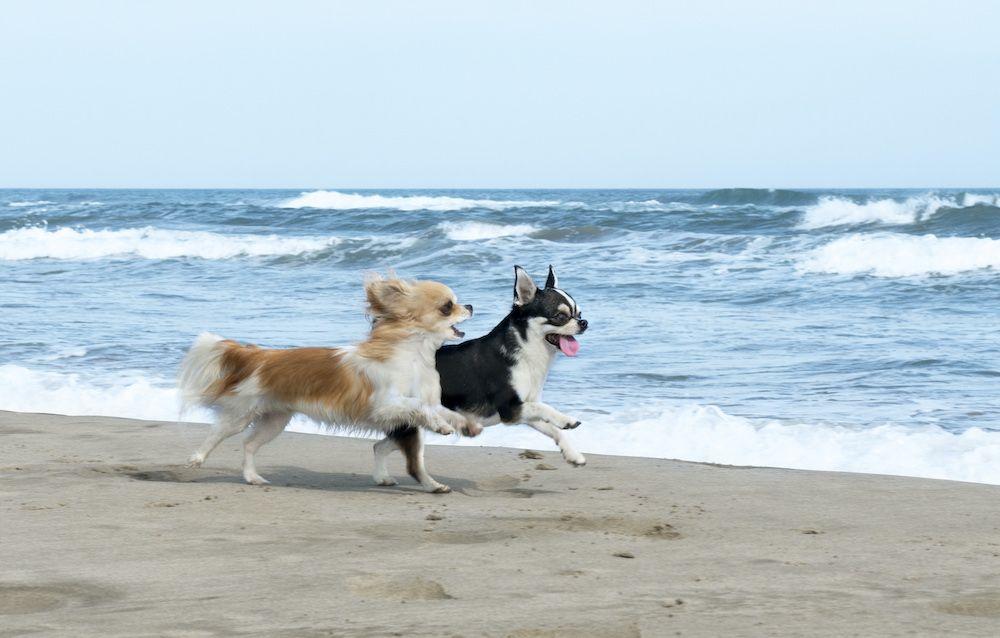 Descobreix-les-17-platges-per-a-gossos-a-Catalunya